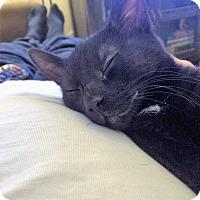 Adopt A Pet :: Walt - Toronto, ON