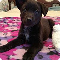Adopt A Pet :: Tootsie - Homewood, AL