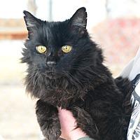 Adopt A Pet :: Nova - Gardnerville, NV