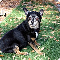Adopt A Pet :: Lady - Lehigh, FL