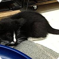 Adopt A Pet :: Enjie - Island Park, NY