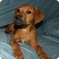 Adopt A Pet :: Barny - Jarrettsville, MD