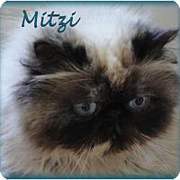 Adopt A Pet :: Mitzi - Beverly Hills, CA