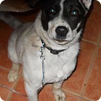 Adopt A Pet :: Durfey - dewey, AZ