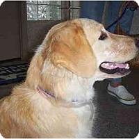 Adopt A Pet :: Sophie - Jacksonville, FL
