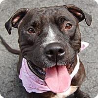 Adopt A Pet :: Molly - Long Beach, NY