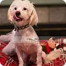 Adopt A Pet :: Josh Turner