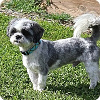Adopt A Pet :: Harper - Winters, CA