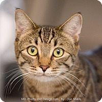 Adopt A Pet :: Canyon - Fountain Hills, AZ