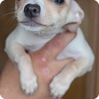 Adopt A Pet :: PAGA - San Pablo, CA