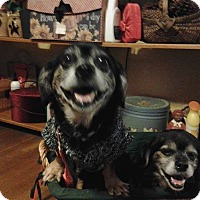 Adopt A Pet :: Petey and Presley - Andalusia, PA