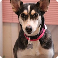 Adopt A Pet :: Betsi - Gilbertsville, PA