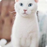 Adopt A Pet :: Mav - Addison, IL