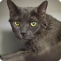 Adopt A Pet :: Fagan - Grayslake, IL