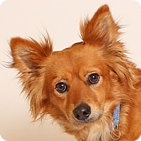 Adopt A Pet :: Bret - Walnut Creek, CA