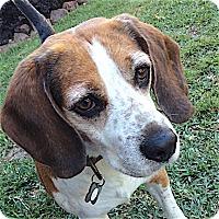 Adopt A Pet :: Hardy - Houston, TX