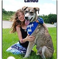 Adopt A Pet :: Lando - Adoption Fee Partially Sponsored! - Plainfield, IL