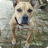 Adopt A Pet :: Lulu - Newark, DE