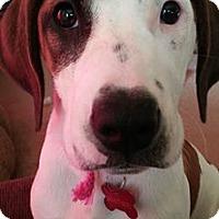 Adopt A Pet :: Strawberry Shortcake - Grafton, WI