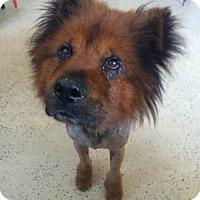 Adopt A Pet :: Russell - San Francisco, CA