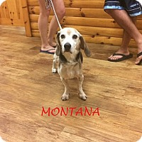 Adopt A Pet :: MONTANA - Ventnor City, NJ