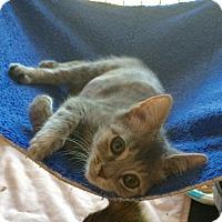 Adopt A Pet :: Gracie #1 - Lunenburg, MA