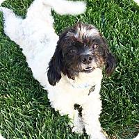 Adopt A Pet :: Myles - Los Angeles, CA