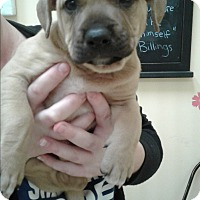 Adopt A Pet :: Jafar - Thousand Oaks, CA