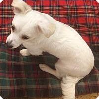 Adopt A Pet :: Taffy Tina - Concord, CA