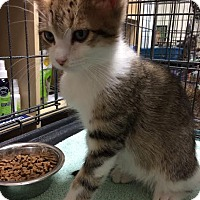 Adopt A Pet :: Bently - Orlando, FL