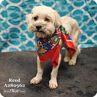 Adopt A Pet :: REED - Conroe, TX