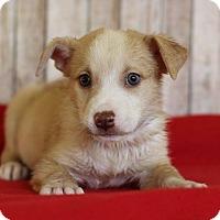 Adopt A Pet :: Zeus - Waldorf, MD