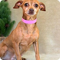 Adopt A Pet :: Mary - Waldorf, MD