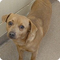 Adopt A Pet :: 1-13 - Triadelphia, WV