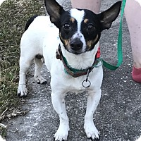 Adopt A Pet :: Rocky - Palm Harbor, FL