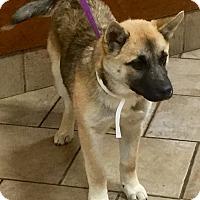 Adopt A Pet :: Polli - Oswego, IL