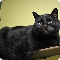 Adopt A Pet :: Manoah - West Des Moines, IA