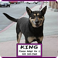 Adopt A Pet :: King - Fowler, CA