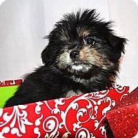 Adopt A Pet :: *Lillian - PENDING - Westport, CT