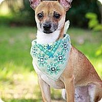 Adopt A Pet :: Tyco - Albany, NY