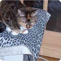 Adopt A Pet :: Precious - Riverside, RI