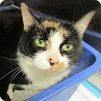 Adopt A Pet :: Mia - Gilbert, AZ