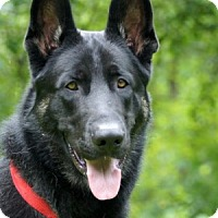 Adopt A Pet :: Diesel - Wayland, MA