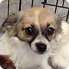 Adopt A Pet :: Zoey (JE)