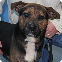 Adopt A Pet :: Buster*ADOPTED!* - Chicago, IL