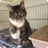 Adopt A Pet :: Puddy Woody - Windsor, CT