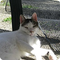Adopt A Pet :: Mousey - Central Islip, NY