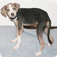 Adopt A Pet :: Waldo - Umatilla, FL