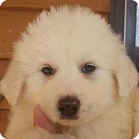Adopt A Pet :: Tim - Allentown, PA