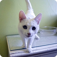 Adopt A Pet :: Albert - Mississauga, Ontario, ON